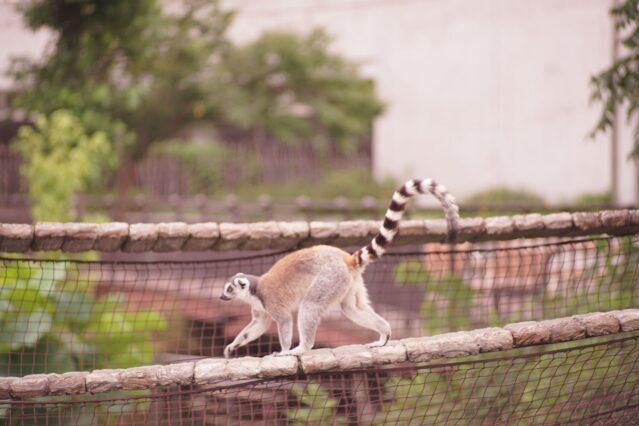 上野動物園 おすすめ ポイント