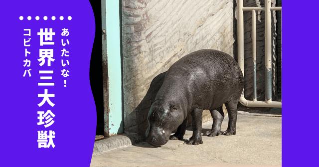 コビトカバ 動物園 どこ