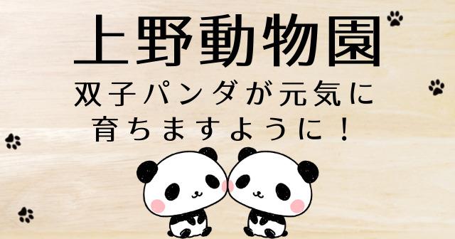 上野動物園 パンダ 公開 いつ